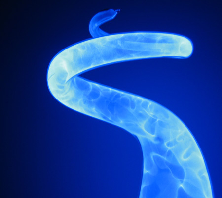 Blue Plasma Snake Digital Photography