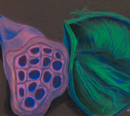 Funky Seeds Chalk Pastel Sketch
